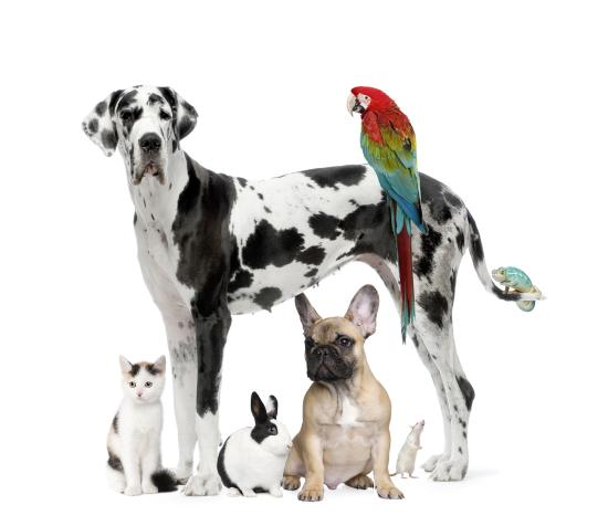 Group Of Pets Dog cat Bird 4788629