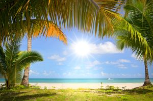 s-Sun-in-blue-sky-and-palm-trees-26620511